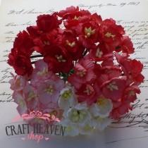 Mix rdeči in beli češnjevi cvetovi - 25mm