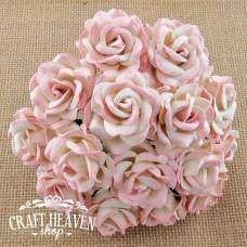 Dvobarvne roza/bež Chelsea vrtnice - 35mm