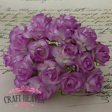 Dvobarvne vijola divje vrtnice - 30mm