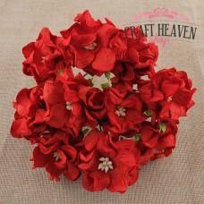 Rdeče gardenije - 35mm