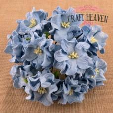 Baby modre gardenije - 35mm