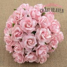 Roza divje vrtnice - 30mm