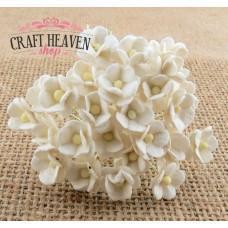 Miniaturni beli cvetovi - 10mm