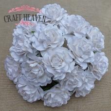 Bele toskanske vrtnice - 35mm