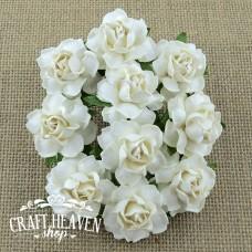 Bele Cottage vrtnice - 25mm