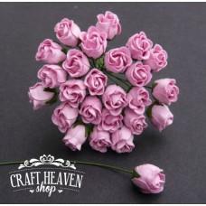 Baby roza zaprte vrtnice - 10mm