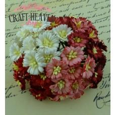 Mixed Red/White Cosmos Daisy Stem Flowers - 25mm