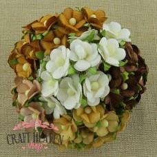 Mixed Brown & White Sweetheart Blossoms - 15mm