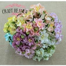 Mixed Colour Miniature Gardenia Flowers - 25mm